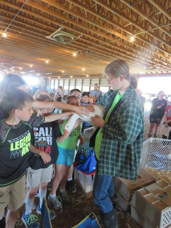 Students got to get up close to the ducks and geese.