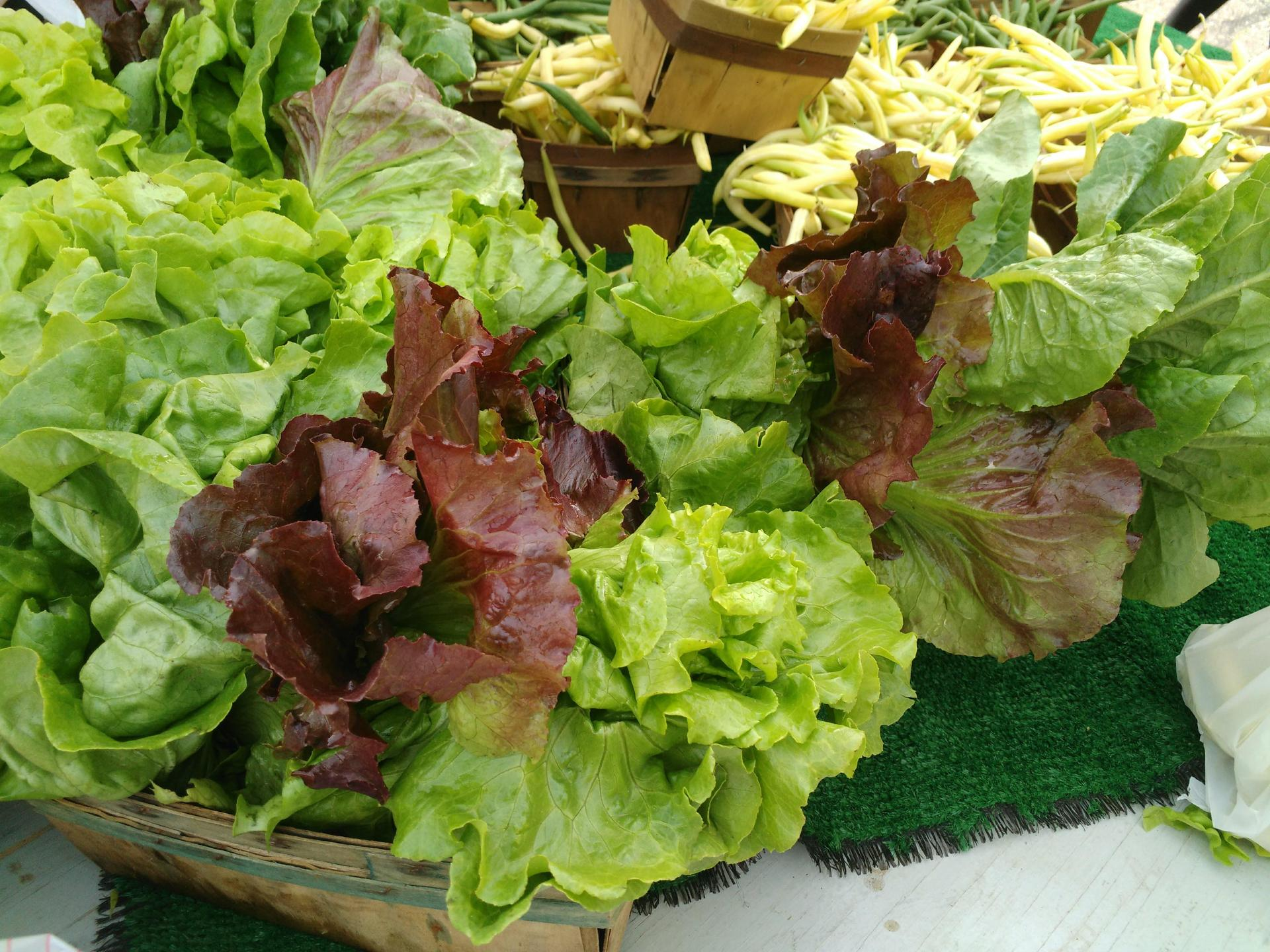 lettucs