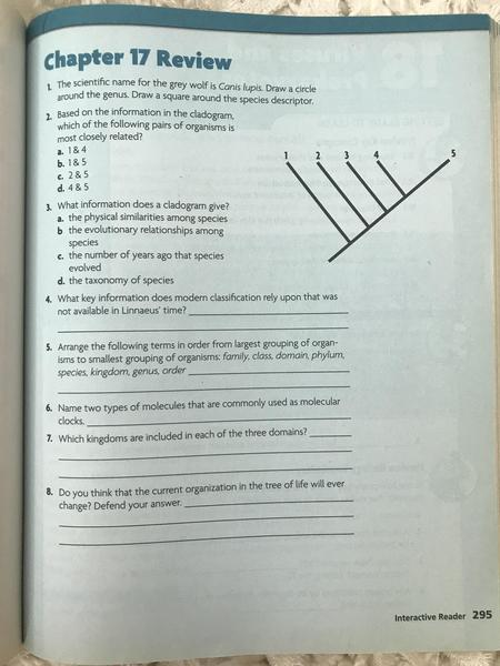 Chapter 17 Interactive Reader Review page 295.jpg
