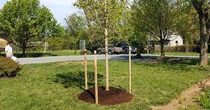 legacytree-websitenewsimg.jpg