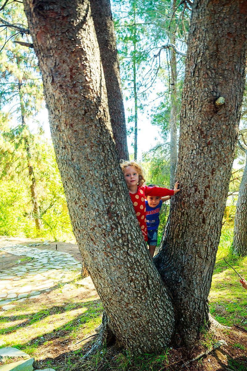 tree V