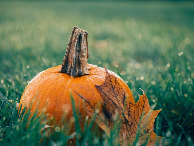 pumpkin food drive