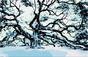 tree-3951665_640.png