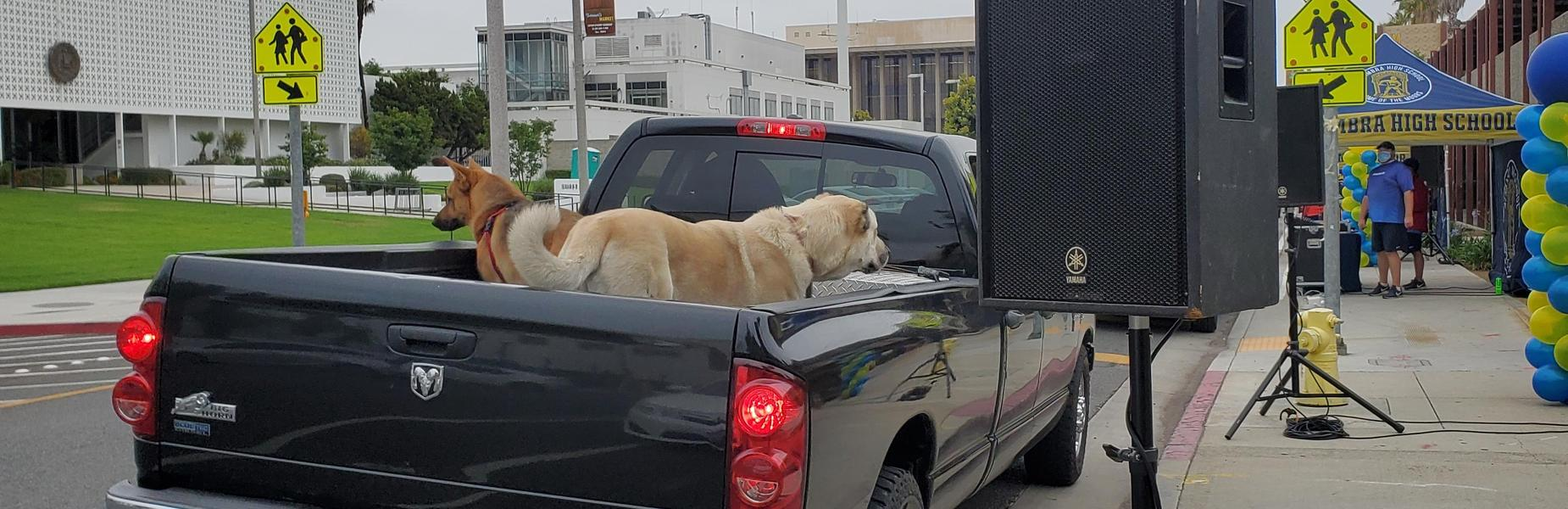 Graduation Drive Thru - June 7th, 2021 (Pets come to support!)