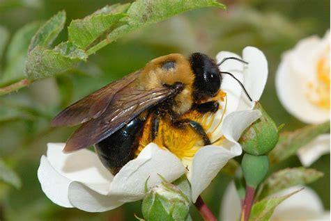 Bee Problem