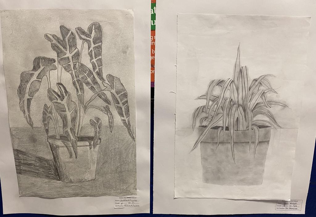 two sketches of plants drawn by students