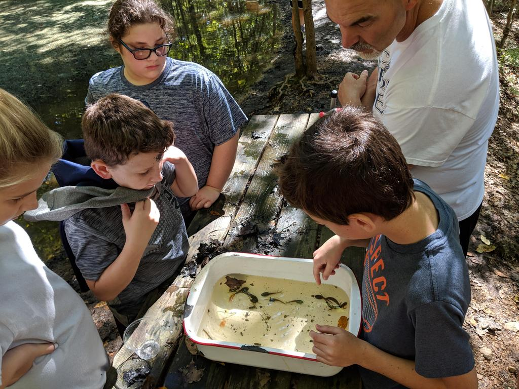 Students viewing what the caught in a tub at the pond study