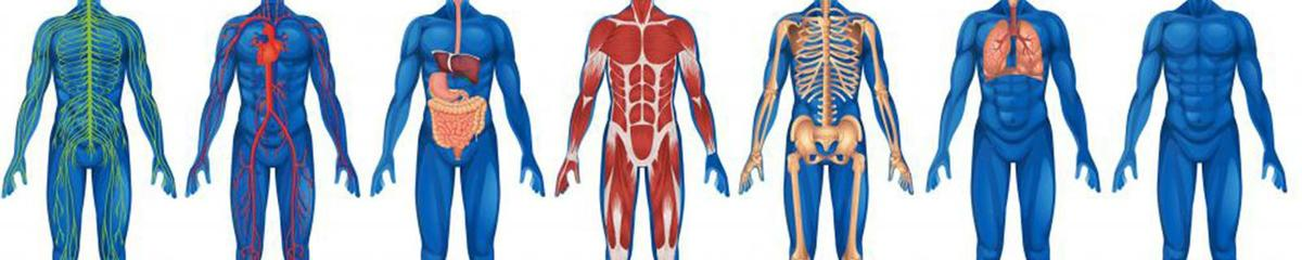 Picture of different body systems