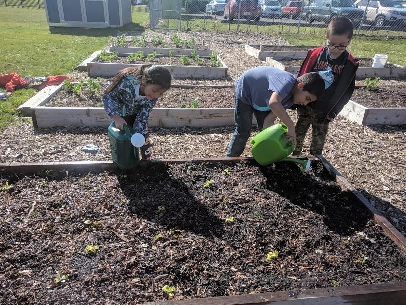 Three students watering plants in a raised garden bed