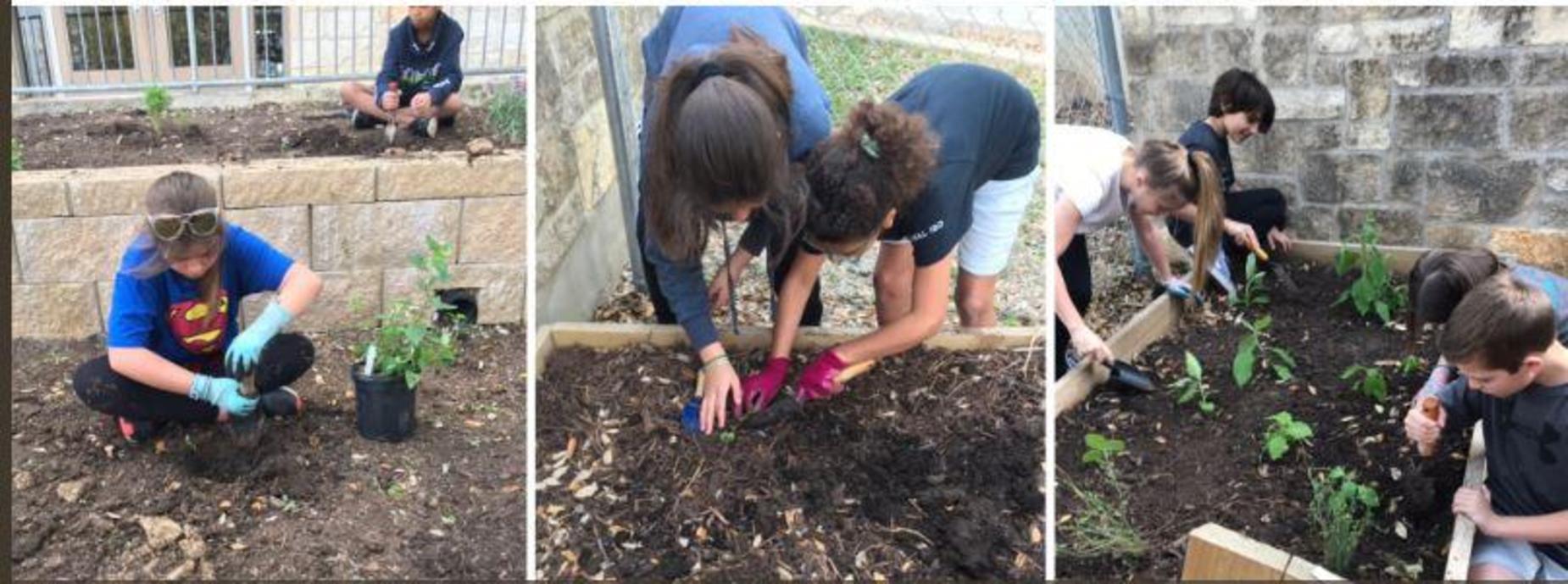 Students working in garden