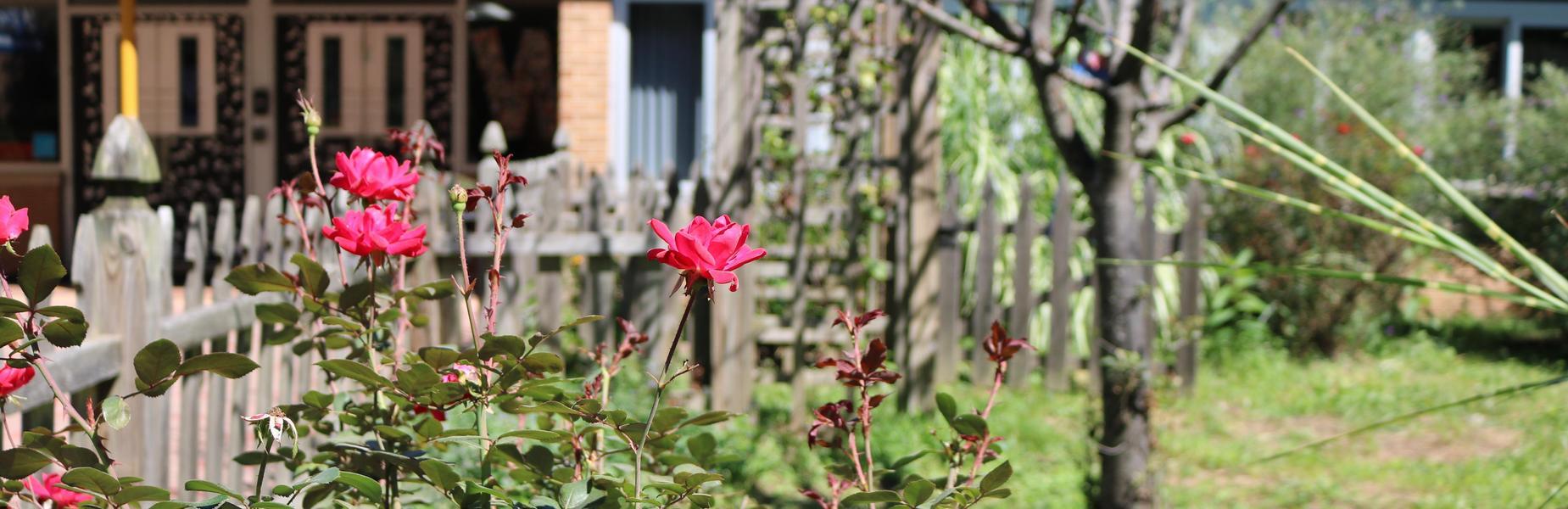 Photo of roses in Washington School garden