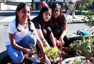 Three Wilson Elementary students pose with succulents in their hands.