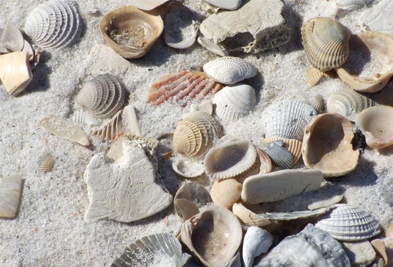 God on the Gulf Coast – Week 6: November 8 Featured Photo