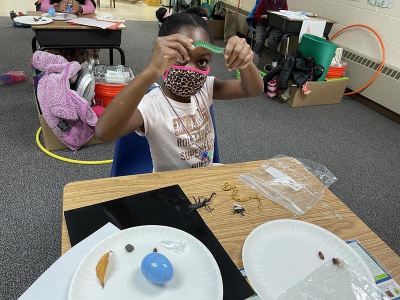 Grades 1/2 Scientists Featured Photo