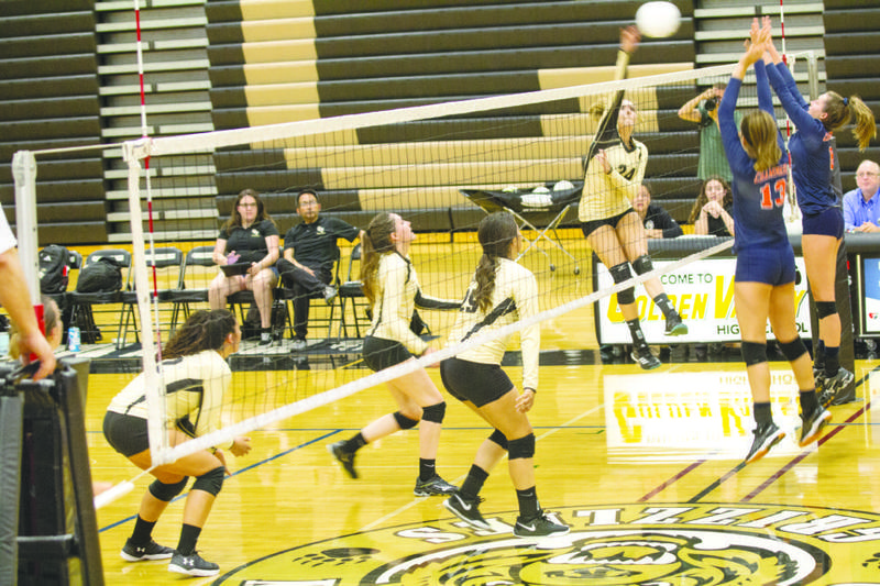 Lady Grizzlies Drop 5 Set Thriller Featured Photo