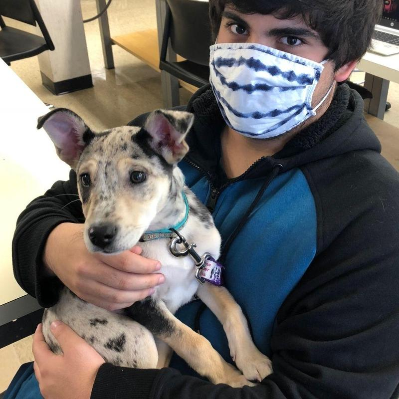 Student Gannon with Dog Misty