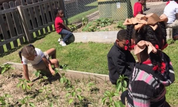 Ms. Burgess' 1st graders cleaning the school garden.