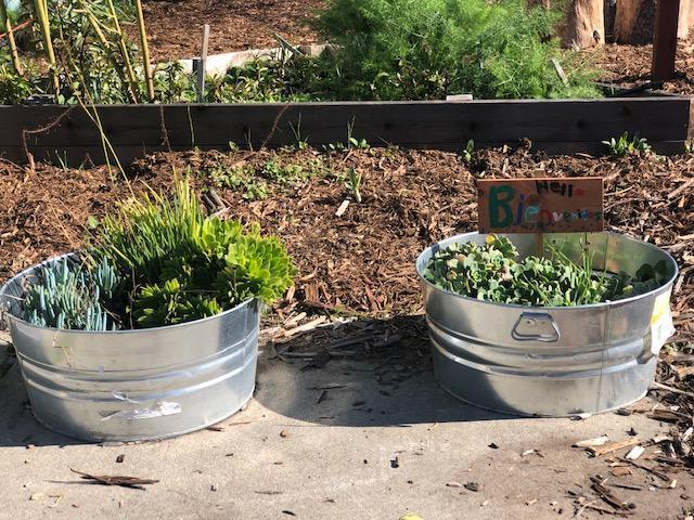 metal tubs re purposed as planters