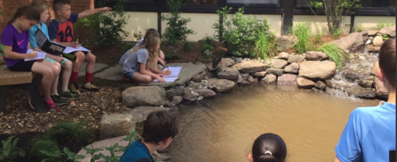 Pond in BT's Outdoor Learning Space