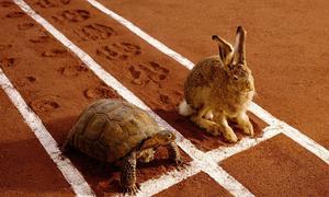 Turtle Rabbit.jpeg