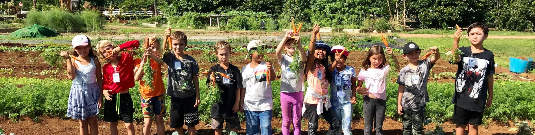 Amazing harvest from our Kilauea School garden!