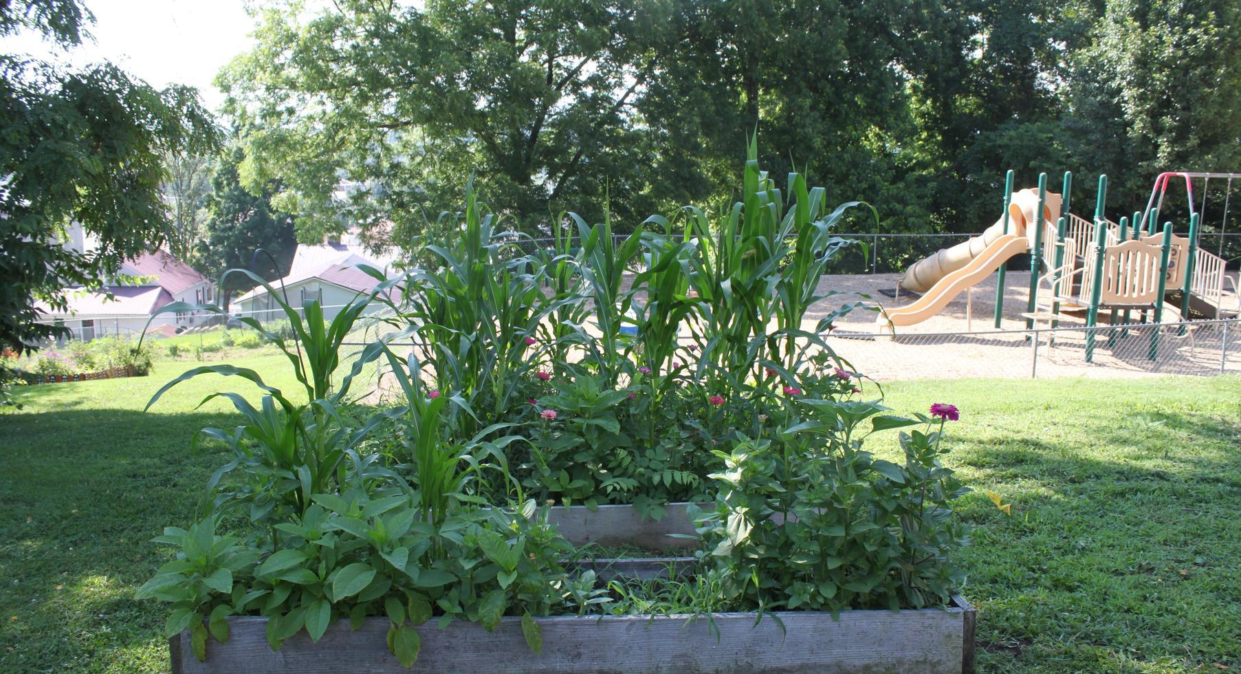 Raised bed gardens.