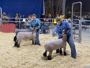 Lambs3.jpg
