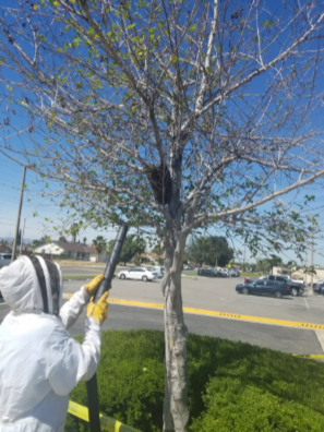 Removing bees from site