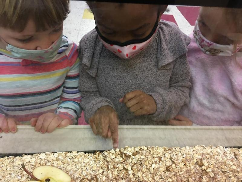 PK Mealworm Study Featured Photo