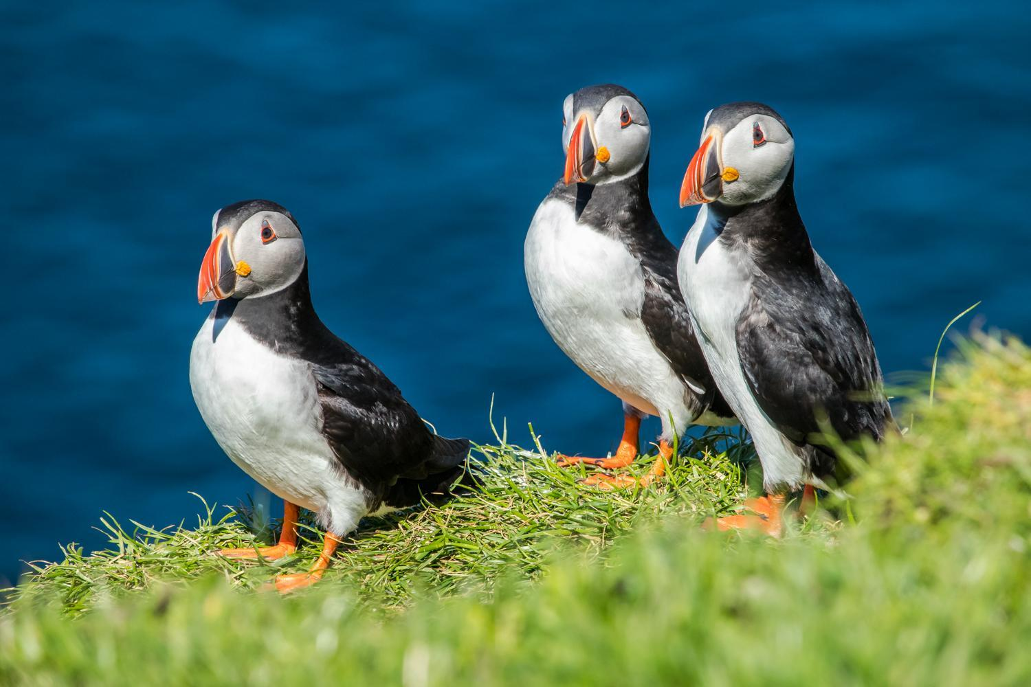 Puffins!!  There were everywhere on the island of Mykines