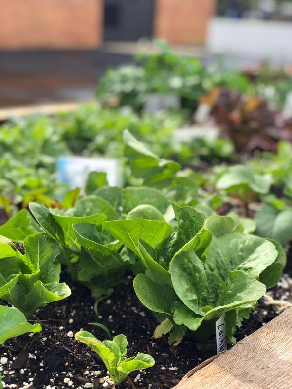 Southwest Planting Day Thumbnail Image