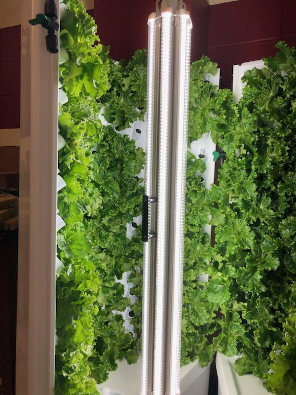 HS Ag - Hydroponic lettuce