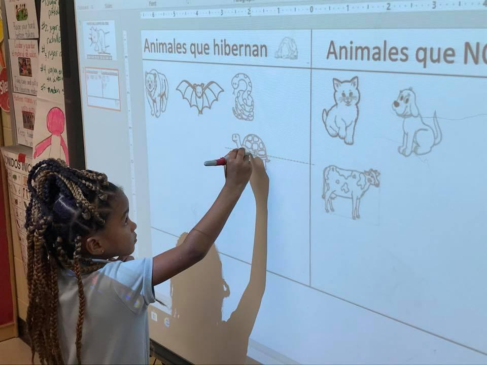 a student in a bilingual class using smart board to demonstrate an activity