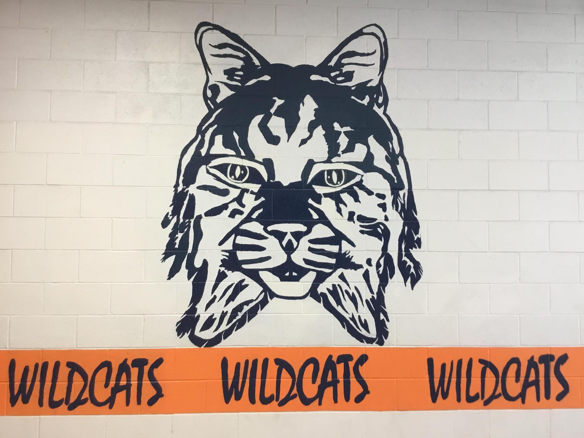 wildcat 1