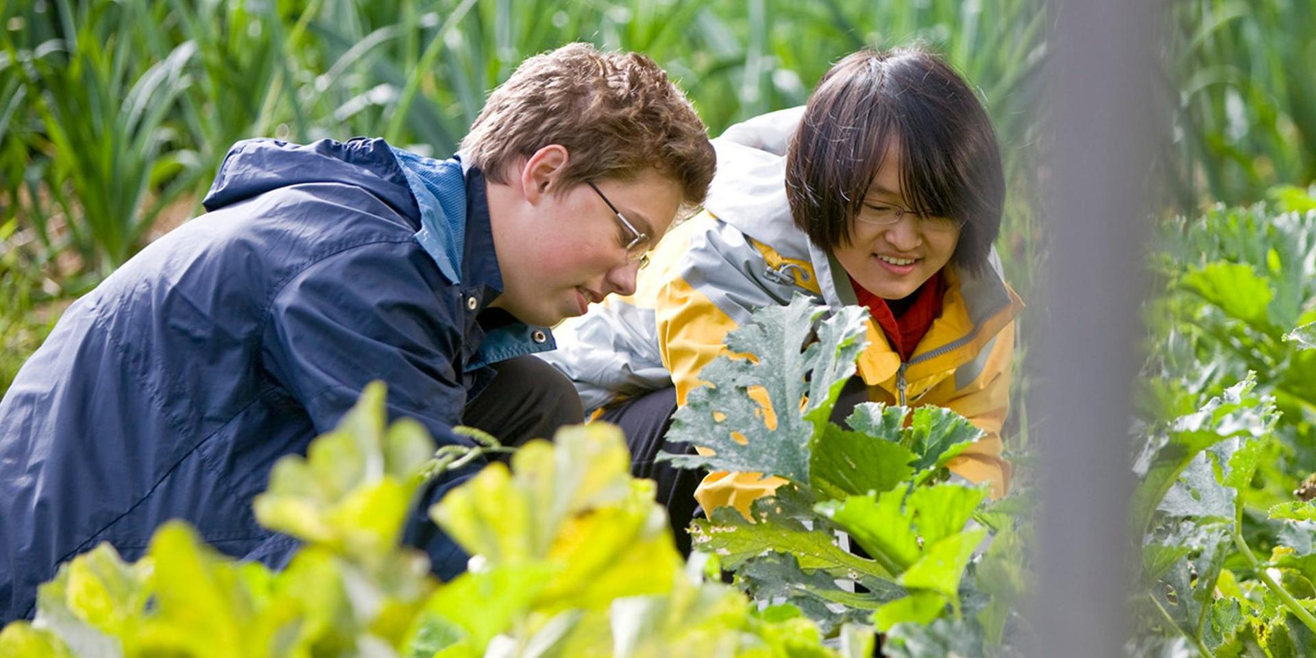Two students gardening on The Farm.