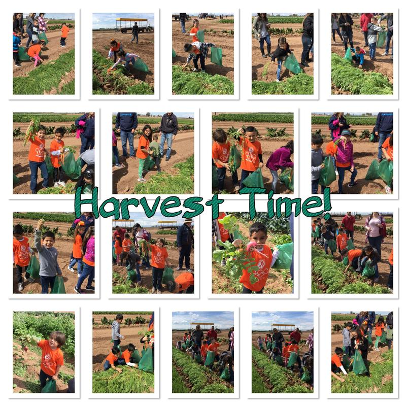 1st Grade Heads to the Farm! Thumbnail Image