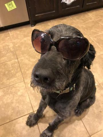 Baxter - the coolest dog in town