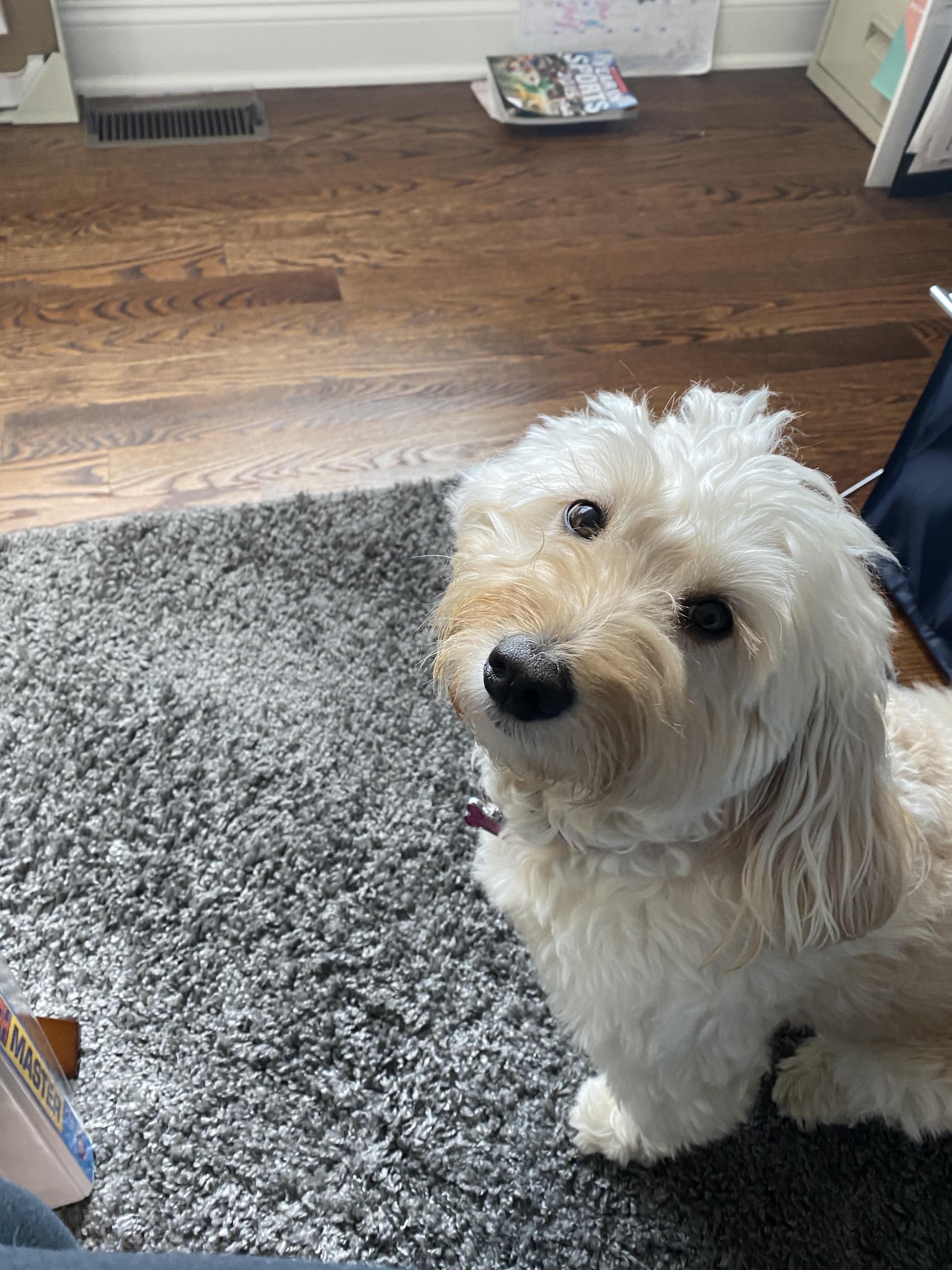 Remi says 'Hi guys!'