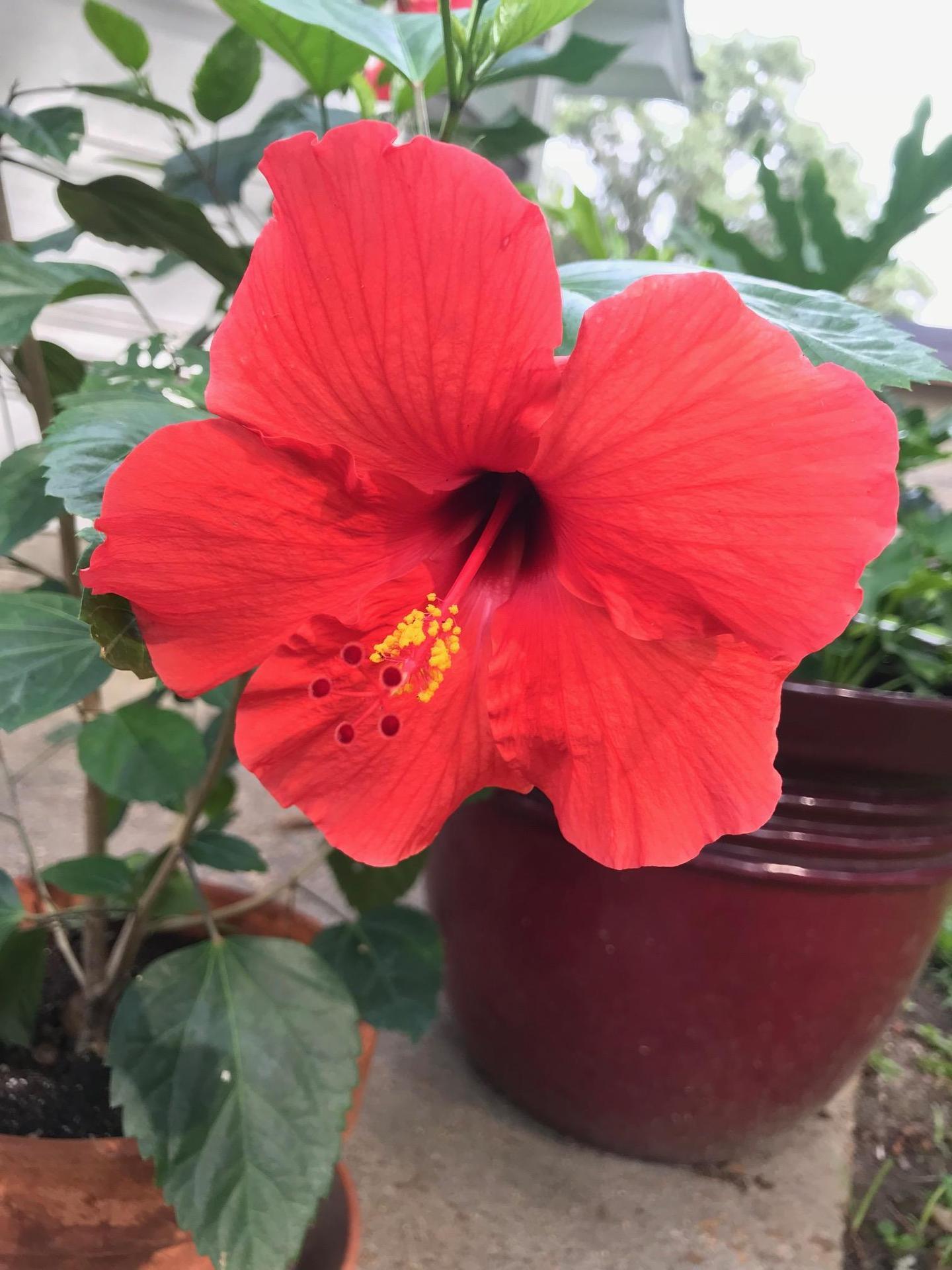 Flowers taken by Rita Brooks