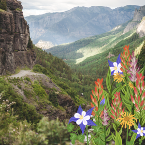 Spring flowers and mountains.