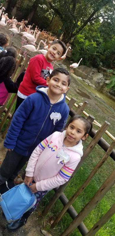 Kindergartners visit the LA Zoo Featured Photo