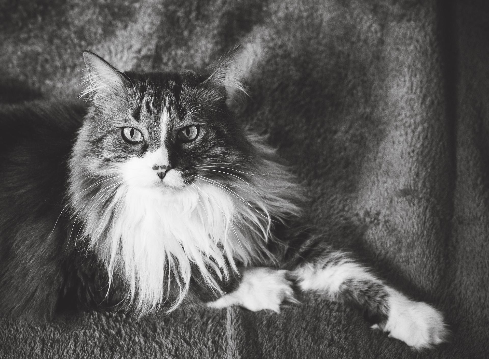 Stanley Cat