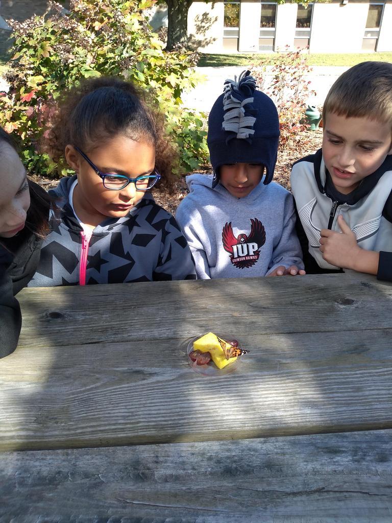 2nd grade butterflies