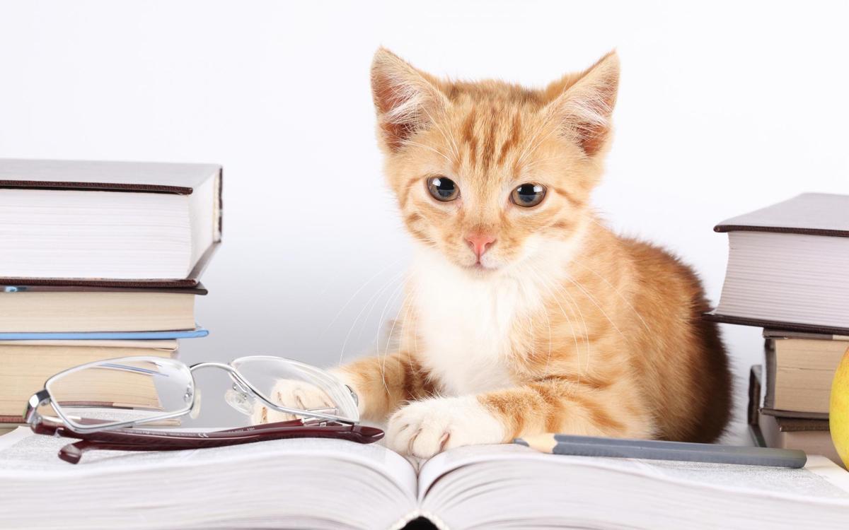 Reading kitty