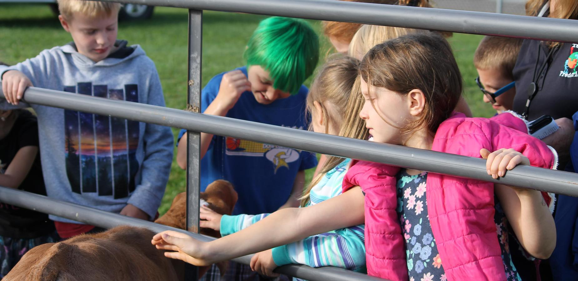 Petting the Animals at Ag Day