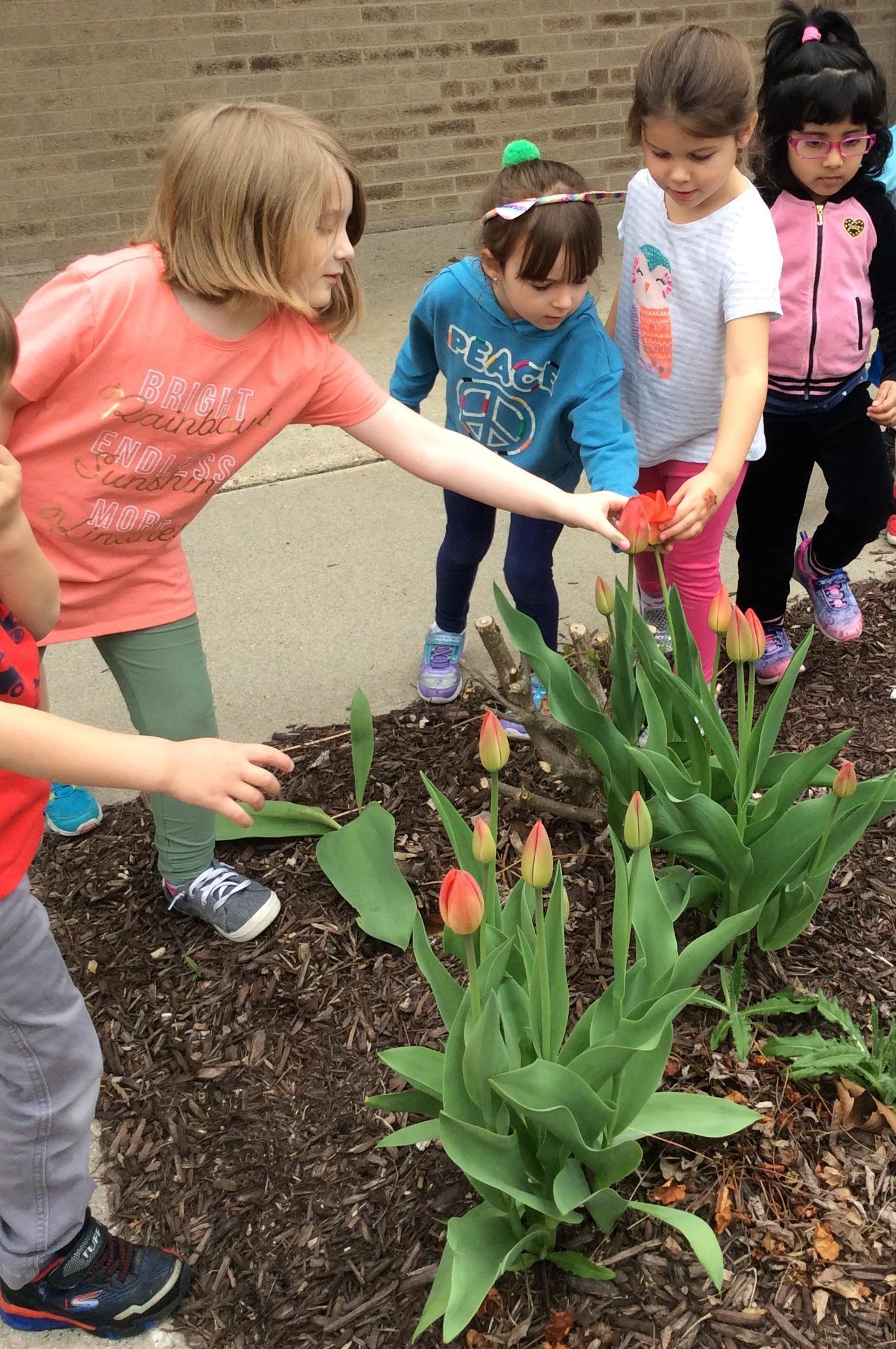 Studying tulips