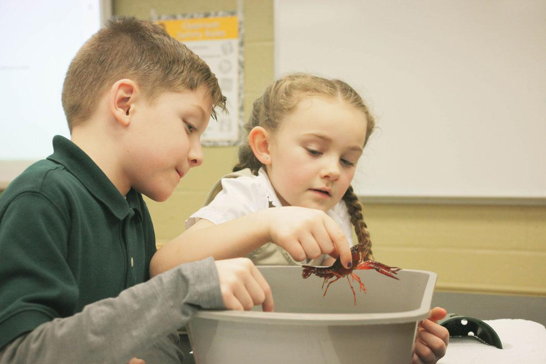 HWIS students meet a crayfish and study it in an inquiry-based unit