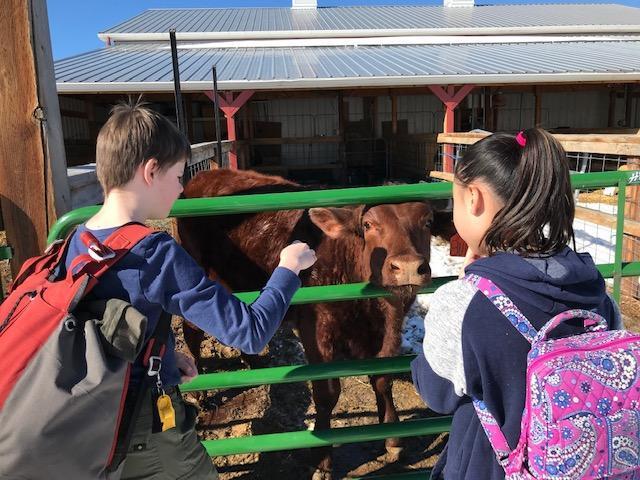 Kids & Cow