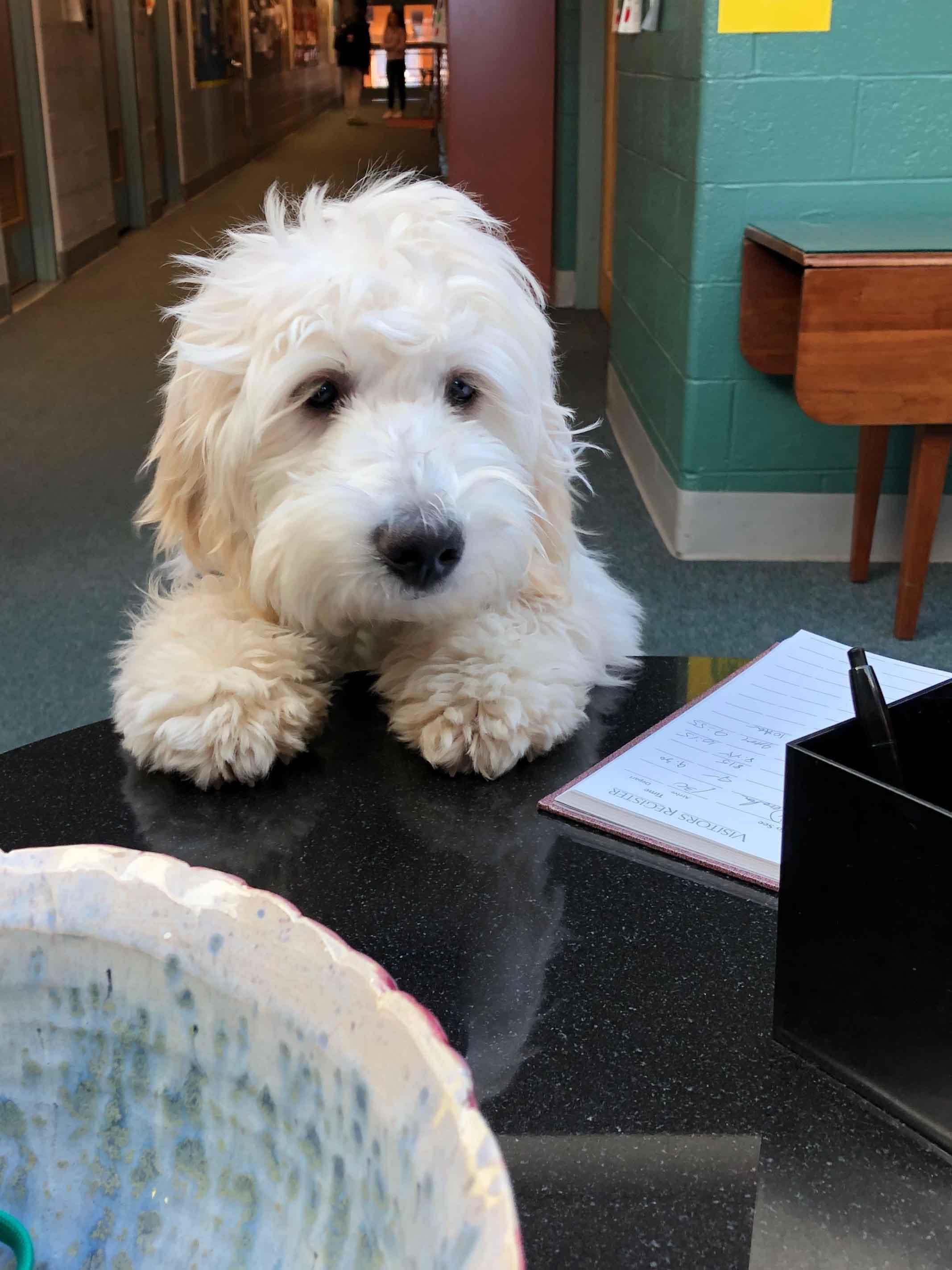 Lucy visits the front desk