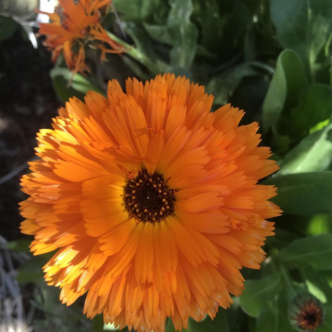 PS Garden flower